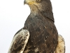 birds_of_prey_05