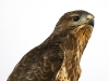 birds_of_prey_06